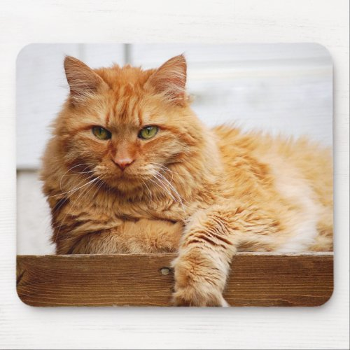 Norwegian Forest Cat, King of Cats Mousepad mousepad