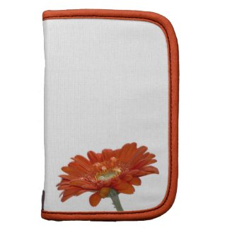 Orange Daisy Gerbera Flower rickshawfolio