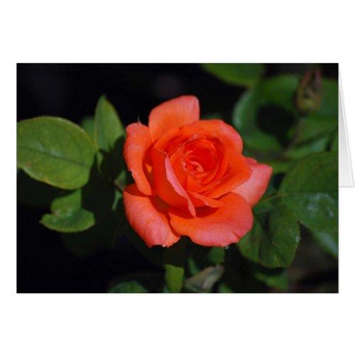 Orange Grandiflora Rose Card card