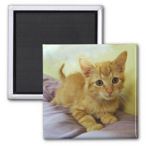 Orange Striped Tabby Kitten Magnet