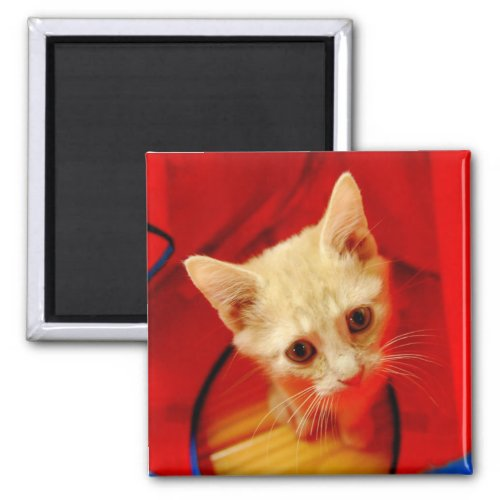 Orange Tabby Kitten Magnet magnet