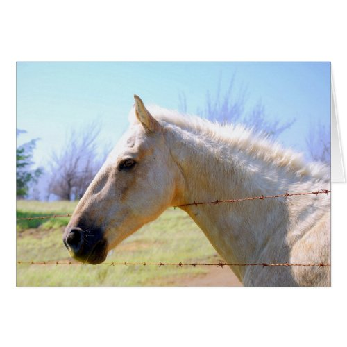 Palomino Horse at Fence Card card