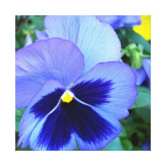 Pansies CricketDiane Photographic Floral on Canvas wrappedcanvas