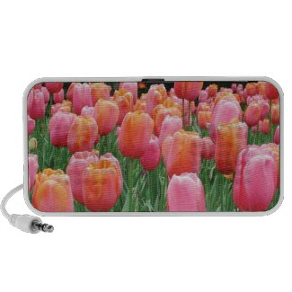 Peach and Pink Tulips Mini Speakers