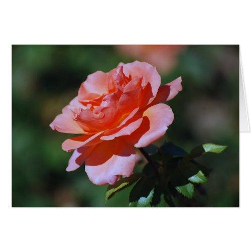 Peach Rose Card card