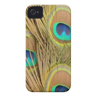 Peacock Feather Phone Cases, Jewelry and Gift Ideas