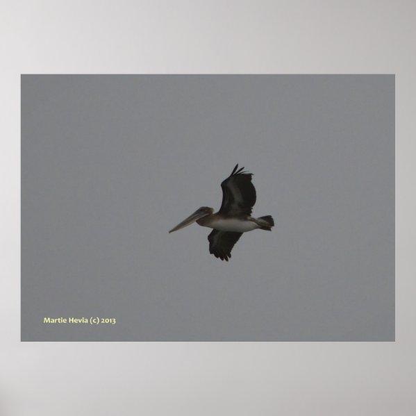 Pelican at Miramar Print