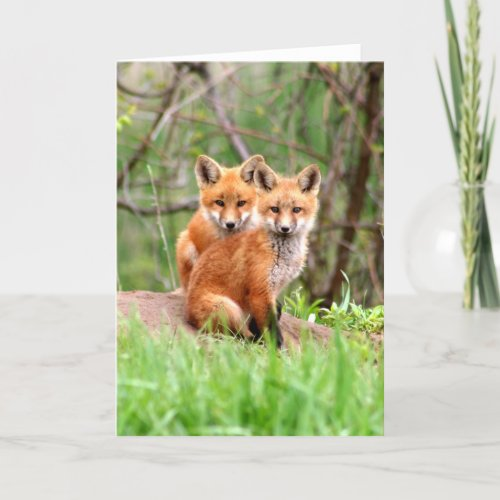 Photo of adorable red fox kits sitting together card