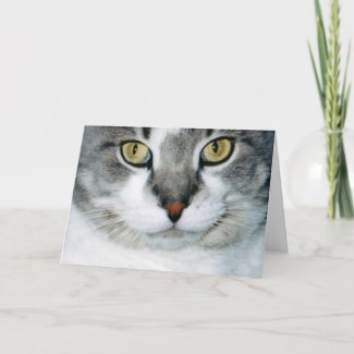 Pickle the Cat Card card