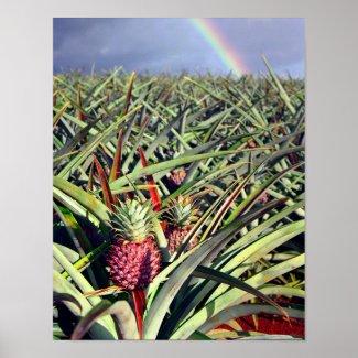 Pineapple Rainbow Print print