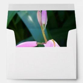 Pink Against Green Envelopes