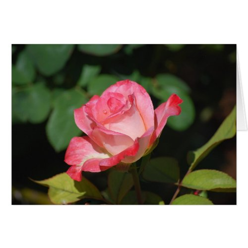 Pink and White Rose card
