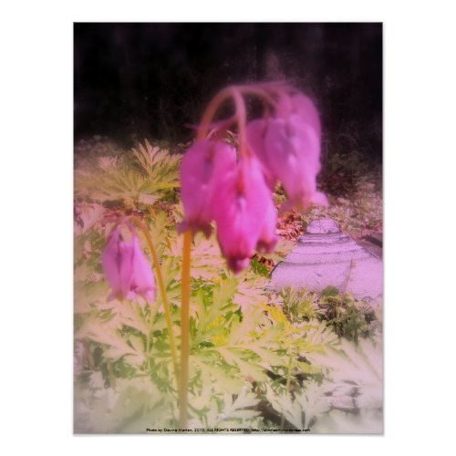 pink bleeding hearts #5, tinted print
