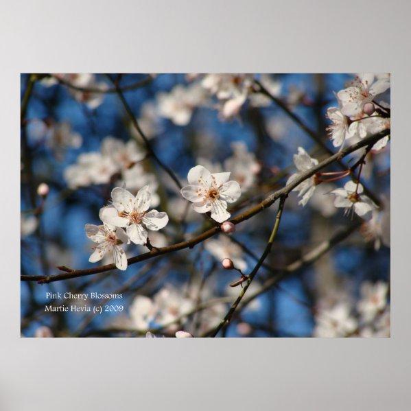 Pink Cherry Blossoms Print
