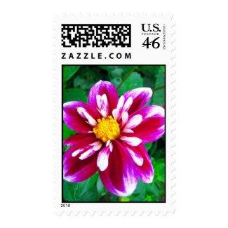 Pink dahlia - Postage