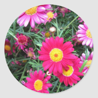 Pink Daisies Stickers