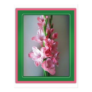 Pink Gladiolus Post Card