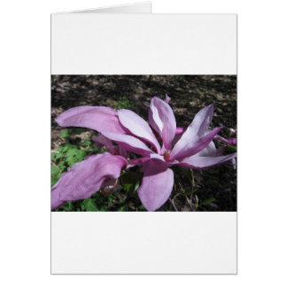 Pink Magnolia In Bloom Cards