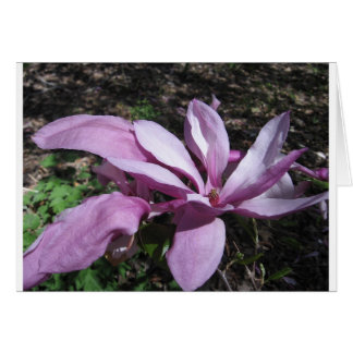 Pink Magnolia In Bloom Greeting Card