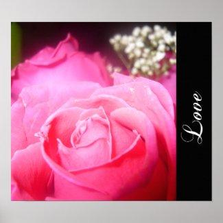 Pink Rose Poster print