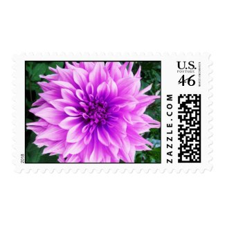 Pink violet dahlia postage stamp
