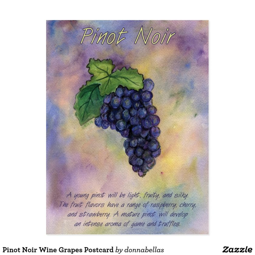 Pinot Noir Wine Grapes Postcard