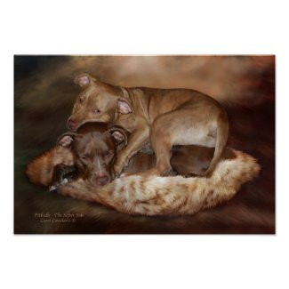 Pitbulls - The Softer Side Art Poster/Print