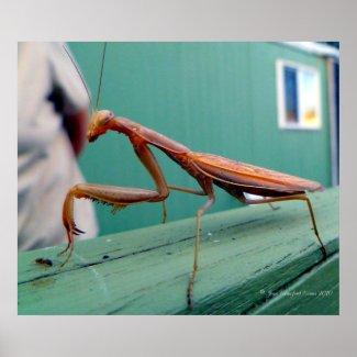 Praying Mantis & ant Print