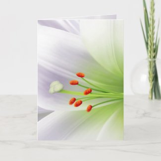 Pretty White Easter Lily card