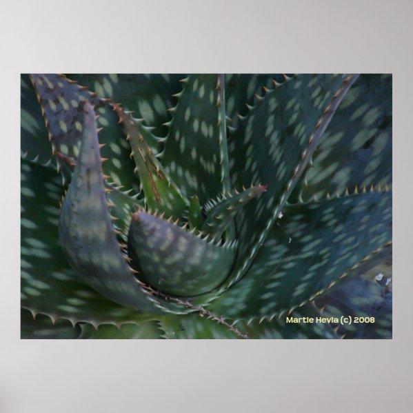 Prickly Aloe Vera Posters