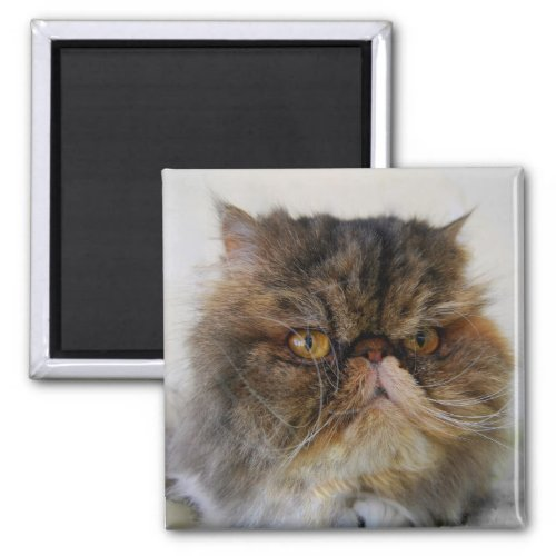 Proud Calico Persian Cat Magnet