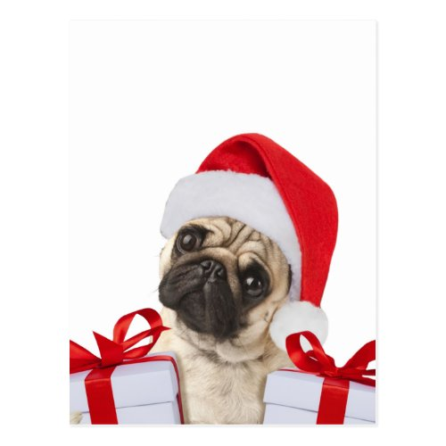 Pug gifts - dog claus - funny pugs - funny dogs postcard