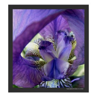 Purple Iris Flower Poster Print by S.Lynnette