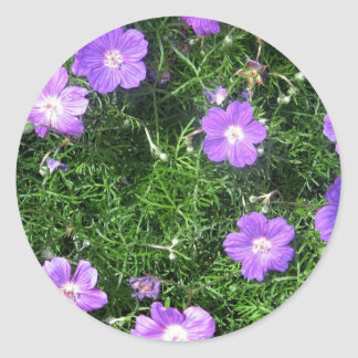 Purple Cosmos Stickers