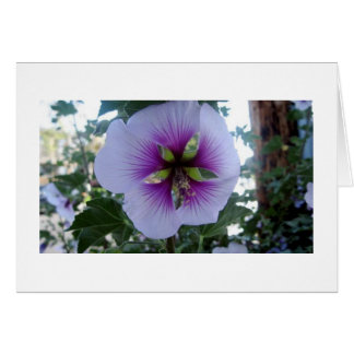 Purple Hibiscus at Pelican Cove Greeting Cards