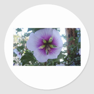 Purple Hibiscus at Pelican Cove Stickers