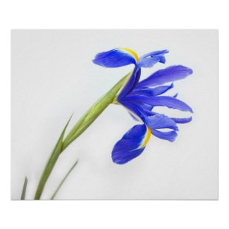 Purple Iris Flower Print print