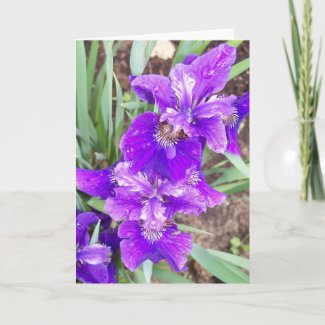 Purple Iris with Water Droplets Card card
