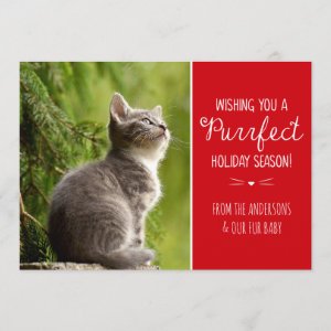 Purrfect Cat Theme Holiday Photo Card