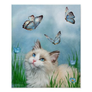 Ragdoll Kitty And Butterflies Art Poster/Print