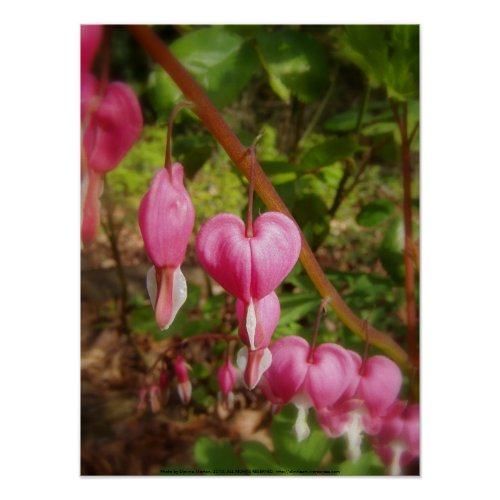 red bleeding hearts #7 print
