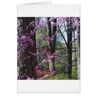 Red Cardinal in Pink Tree
