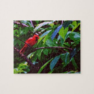 Red Cardinal Puzzles