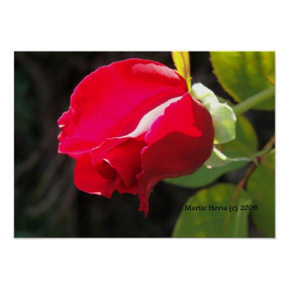 Red Rose Bud Print - Select Your Frame