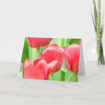 Sweet Red Tulips Blank Greeting Card