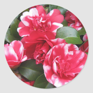 Red & White Striped Roses Round Stickers