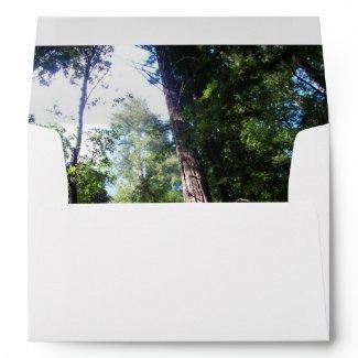 Redwoods - Envelope envelope