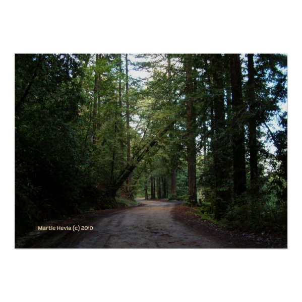 Redwoods Mountain Road print