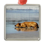 Rhodesian Ridgeback - Is the Water Cold? Ornaments