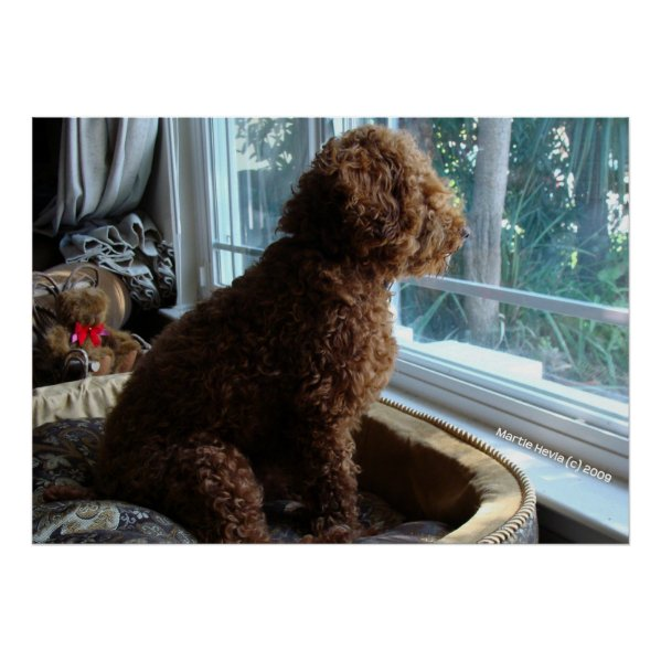 Rookie Waits by the Window Print